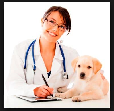 Dónde Estudiar Medicina Veterinaria y Zootecnia en Colombia